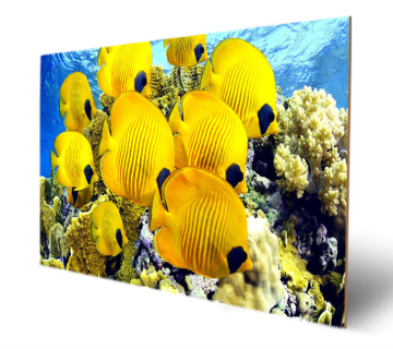 Beautirul Yellow Fish With See Under The Water